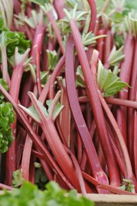 rhubarb at farmer's market in portland